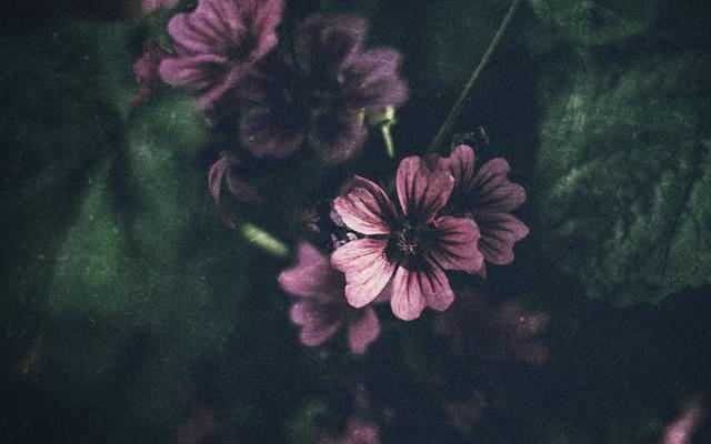 美しい蝶々が舞う日に、憑依してきた女の子の話の画像