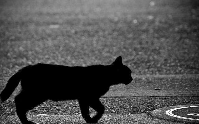 黒猫が目の前を通るとなにか不吉なことが起きるの画像