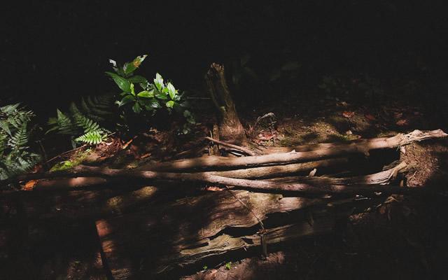 先祖供養の不足が夢に現れたのでお墓参りをした時の話の画像